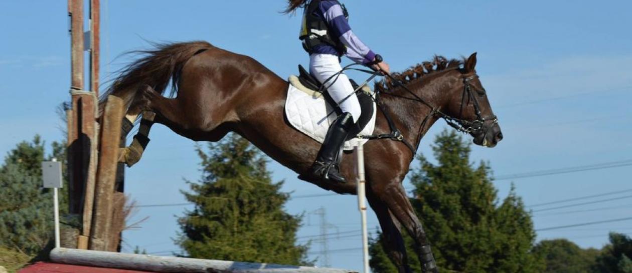 Equestrian center of Buzenval