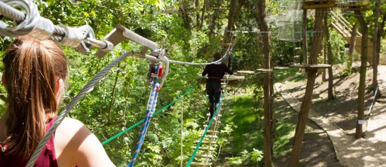 Adventure tree-climbing : ready for two hours of intense emotions !
