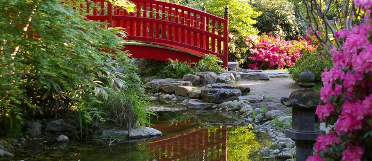 Naturalist walk in the zen garden