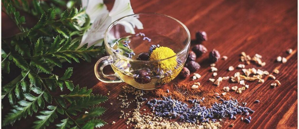 Atelier découverte des plantes aromatiques