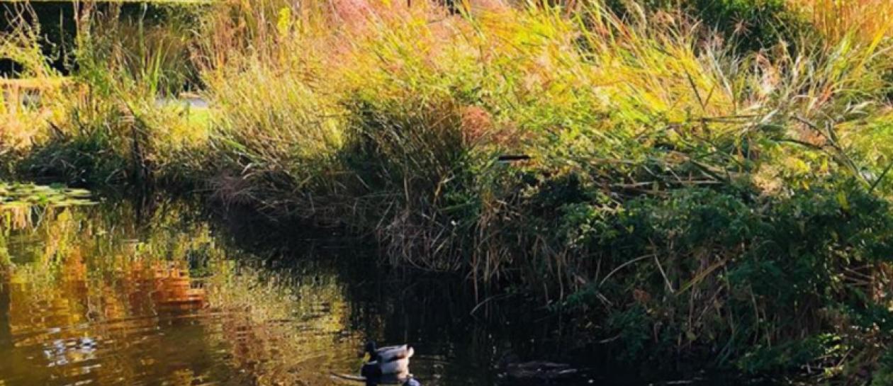 Le Parc des Impressionnistes : un hommage à Monet